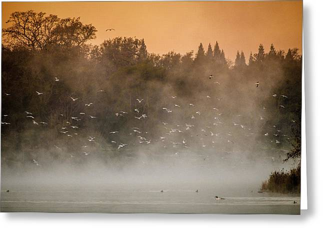 Birds And The Fog  Greeting Card