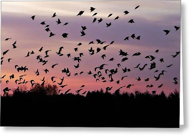 Birds At Sunrise Greeting Card by Aimee L Maher Photography and Art Visit ALMGallerydotcom