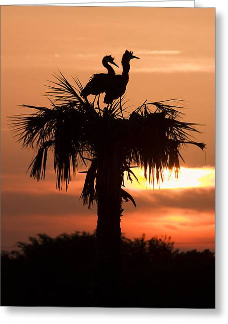 Birds At Sunrise On Florida Palm Tree Greeting Card by Bill Swindaman