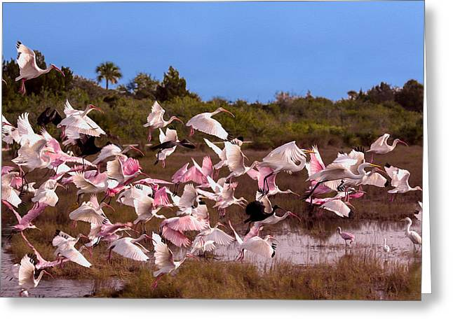 Birds Call To Flight Greeting Card