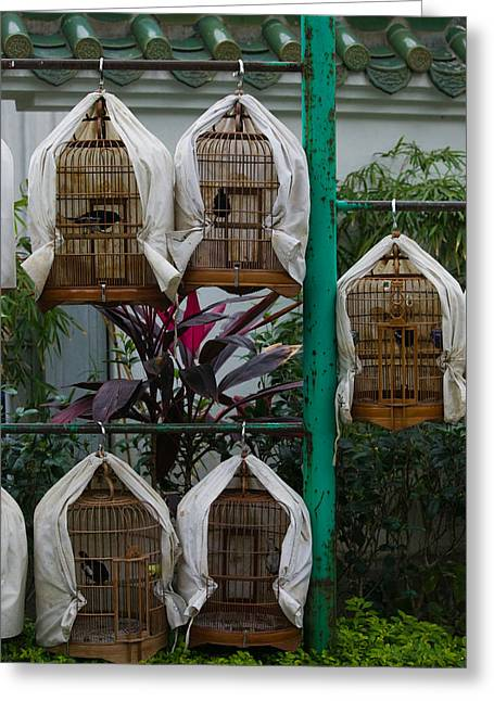 Birds In Cages For Sale At A Bird Greeting Card