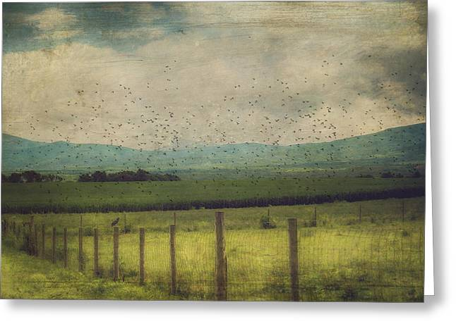 Birds In The Cornfield Greeting Card by Kathy Jennings