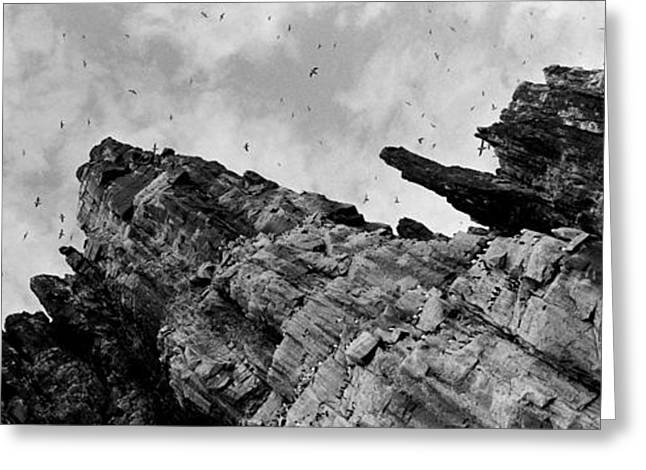 Birds Nesting In Cliffs, Norway Greeting Card by Panoramic Images