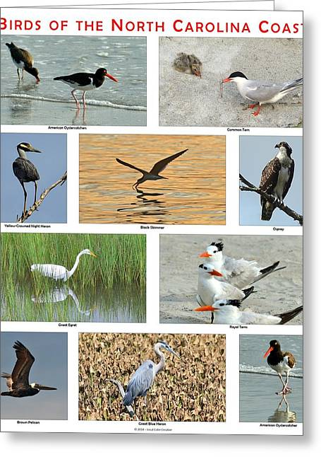 Birds Of North Carolina Coast Greeting Card