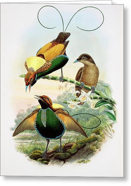 Birds-of-paradise Greeting Card