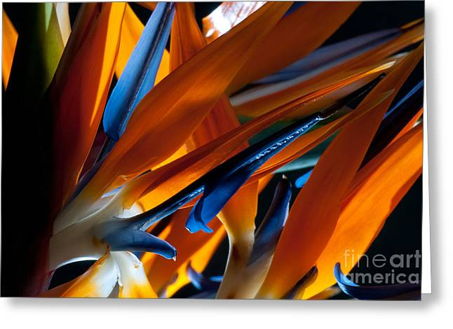 Birds Of Paradise Greeting Card by Todd Edson