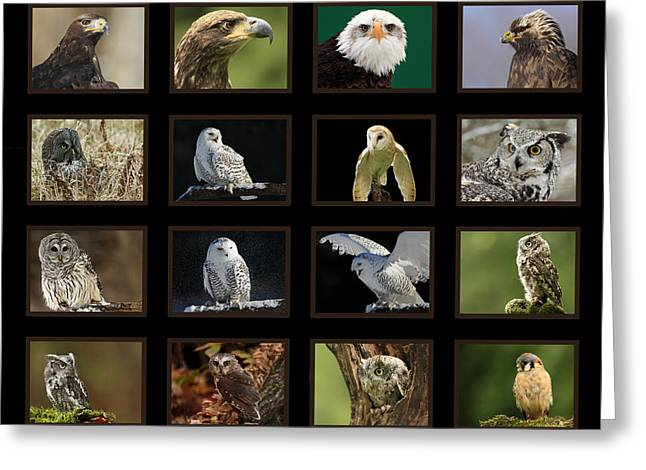 Birds Of Prey Of Canada Greeting Card by Inspired Nature Photography Fine Art Photography