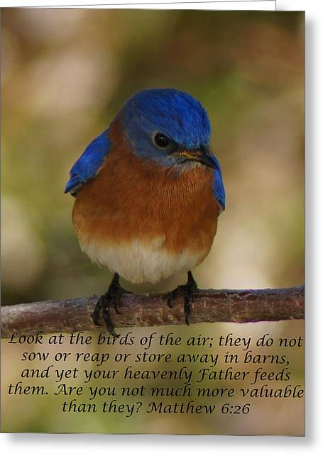 Birds Of The Air Greeting Card by B Wayne Mullins