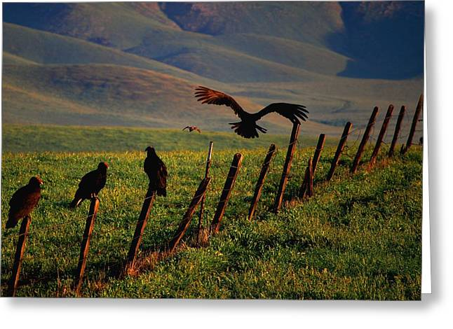 Greeting Card featuring the photograph Birds On A Fence by Matt Harang