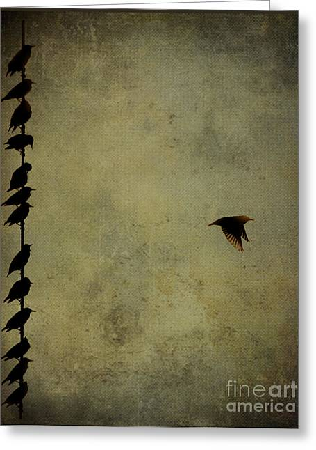Birds On A Wire 2 Greeting Card by Jim Wright