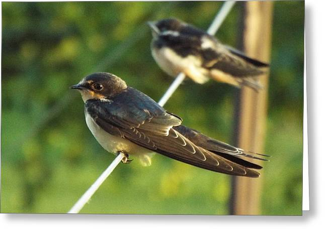 Birds On A Wire Greeting Card by Caryl J Bohn