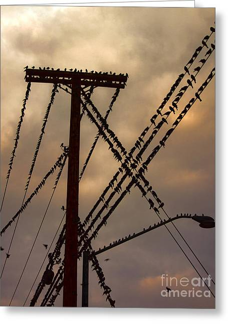 Birds On A Wire Greeting Card by Gregory Dyer