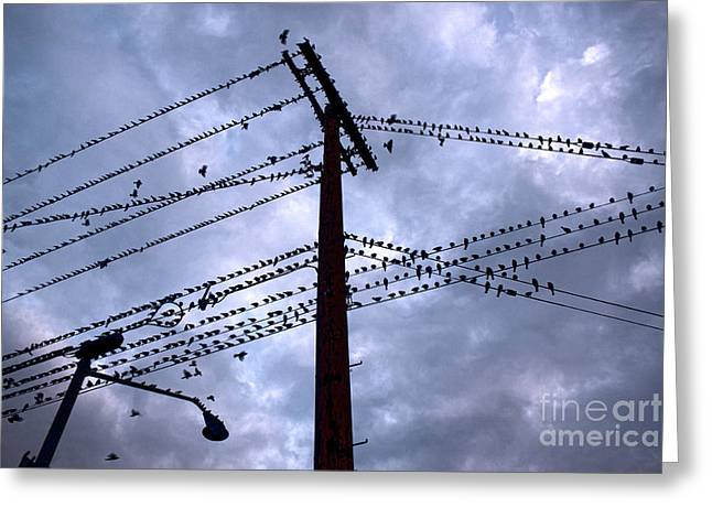 Birds On A Wire In Blue Greeting Card by Gregory Dyer