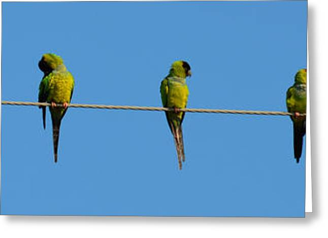Birds On A Wire Greeting Card by Julie Cameron