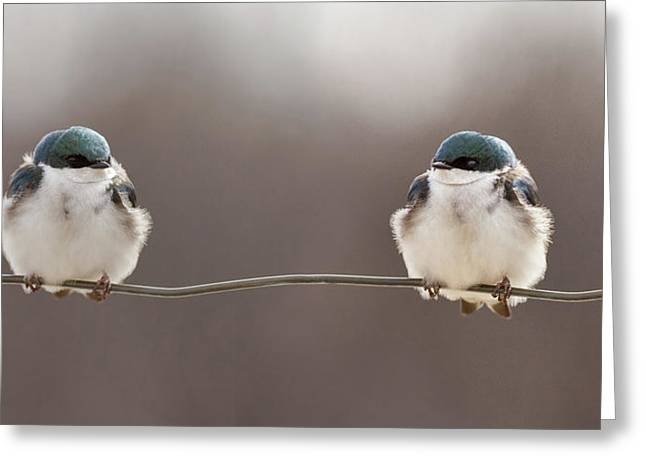 Birds On A Wire Greeting Card by Lucie Gagnon