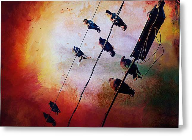 Birds On A Wire Greeting Card by Micki Findlay
