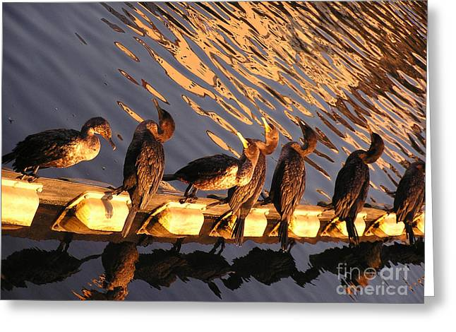 Birds On Pond In Oakland Greeting Card by James T