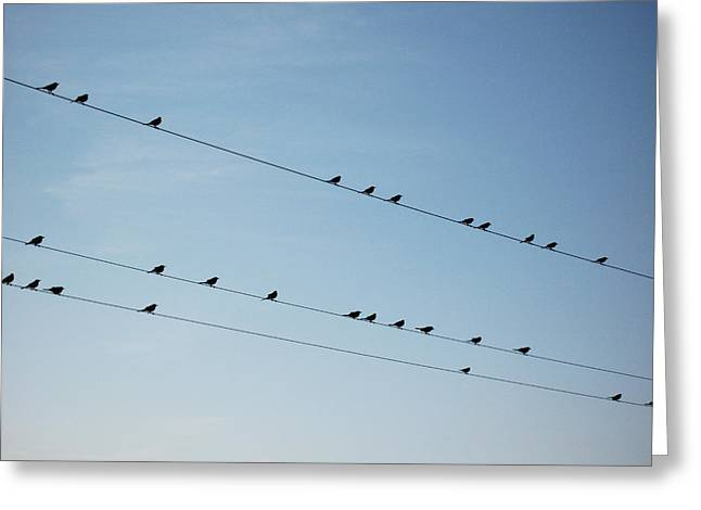 Birds On Telephone Lines Greeting Card by Carl Purcell