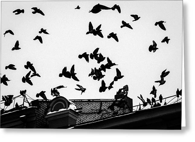 Birds Over City - Featured 3 Greeting Card by Alexander Senin