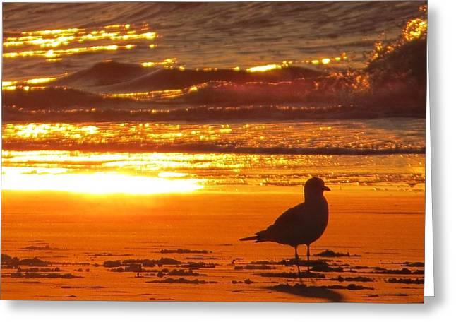 Bird's Paradise Greeting Card
