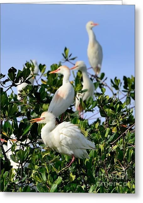 Birds Quartet Greeting Card