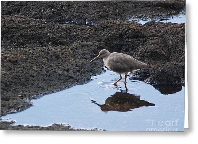 Greeting Card featuring the photograph Bird's Reflection by Belinda Greb