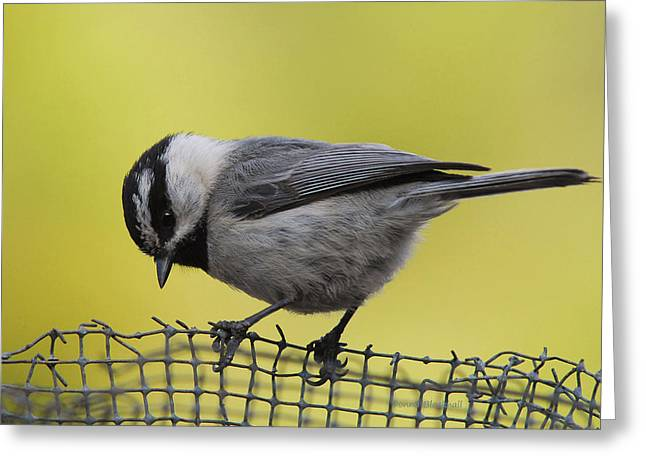 Birdseed Bandit Greeting Card