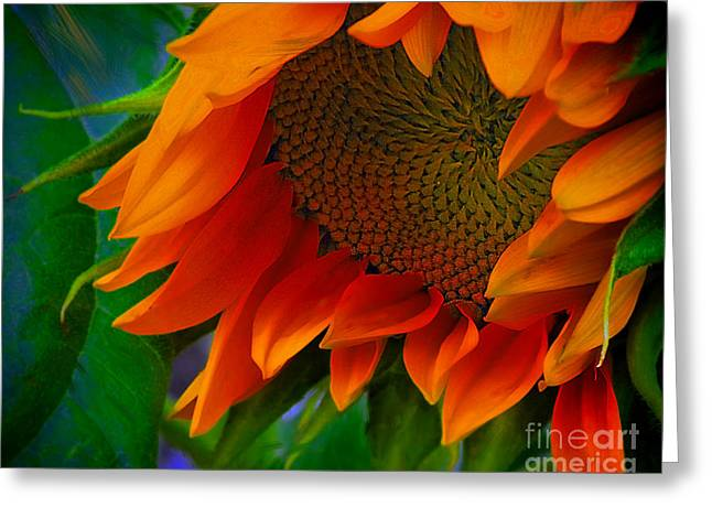 Birth Of A Sunflower Greeting Card by John  Kolenberg