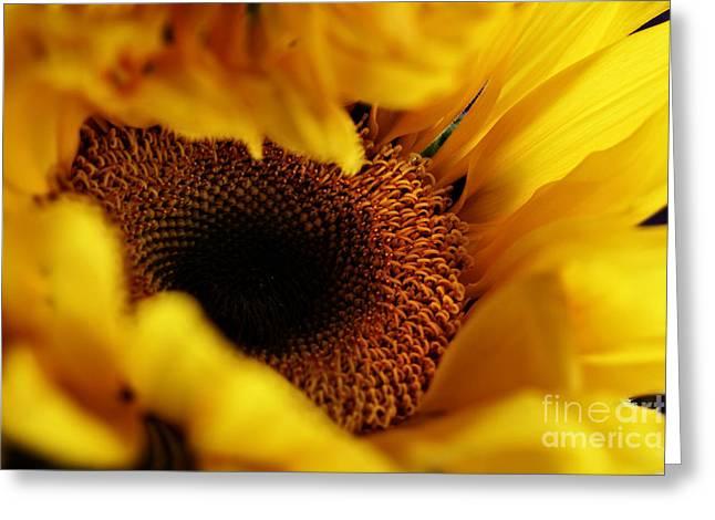 Birth Of A Sunflower Greeting Card by Stephanie Frey
