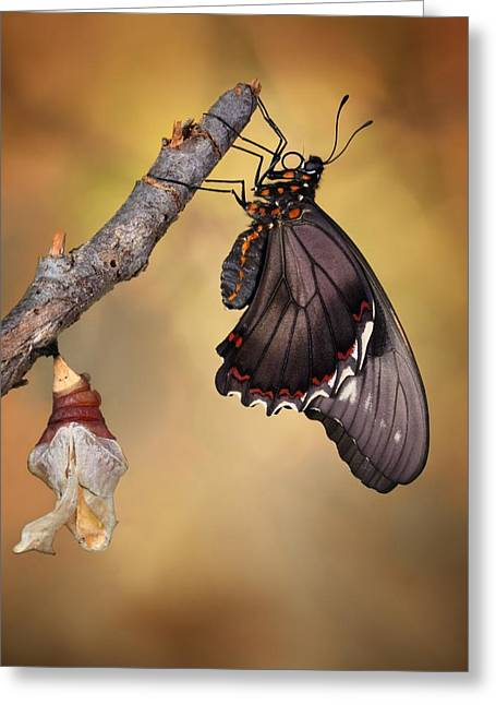 Birth Of A Swallowtail Greeting Card