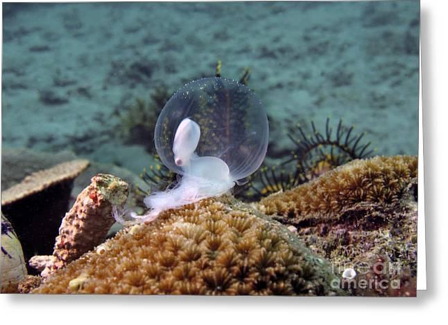 Birth Of Marine Cuttlefish Greeting Card by Sergey Lukashin