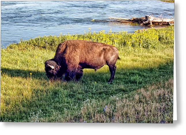 Greeting Card featuring the photograph Bison 4 by Dawn Eshelman