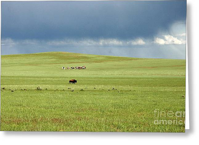 1009a Bison And Riders Greeting Card
