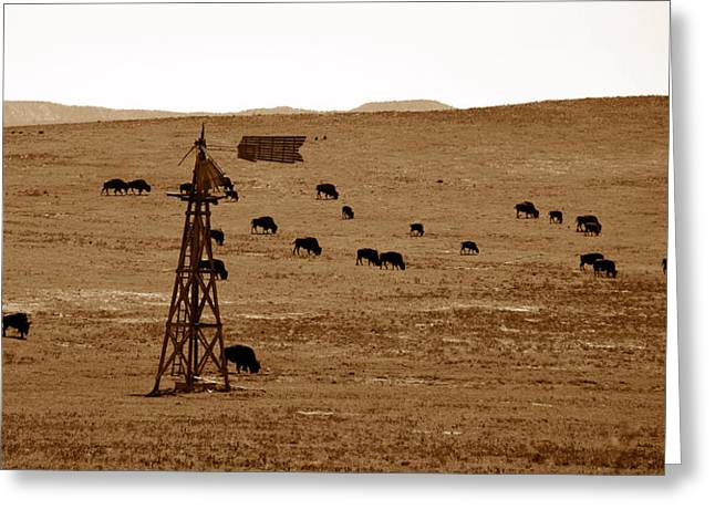 Bison And Windmill Greeting Card by David Lee Thompson