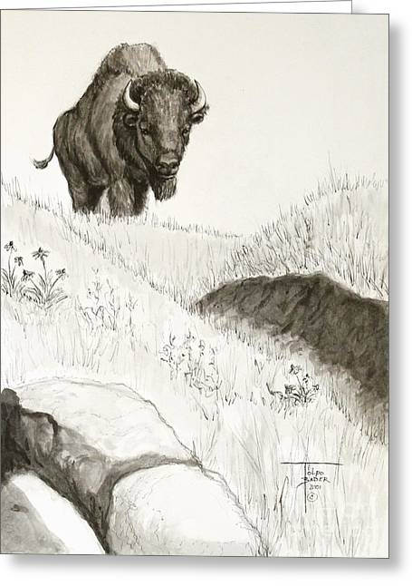 Bison Approach Greeting Card