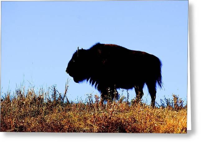 Bison Bull In Silhouette In Lamar Greeting Card by Richard Wright