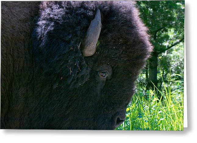 Bison Close Up Greeting Card