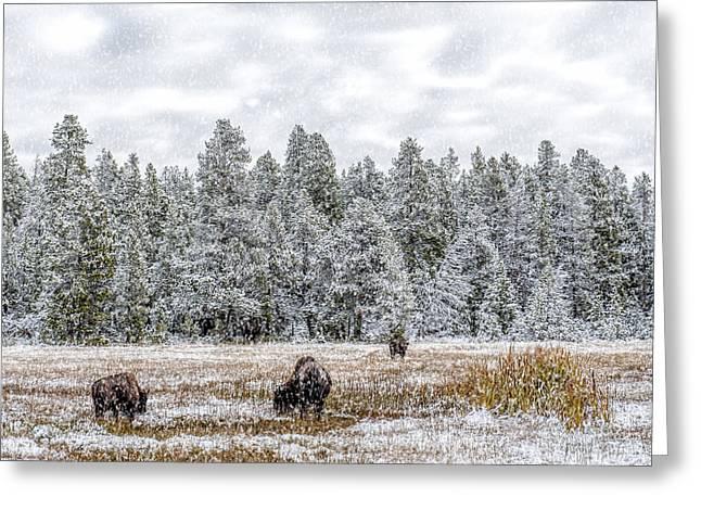 Bison Feeding In The Snow Greeting Card by Paul W Sharpe Aka Wizard of Wonders