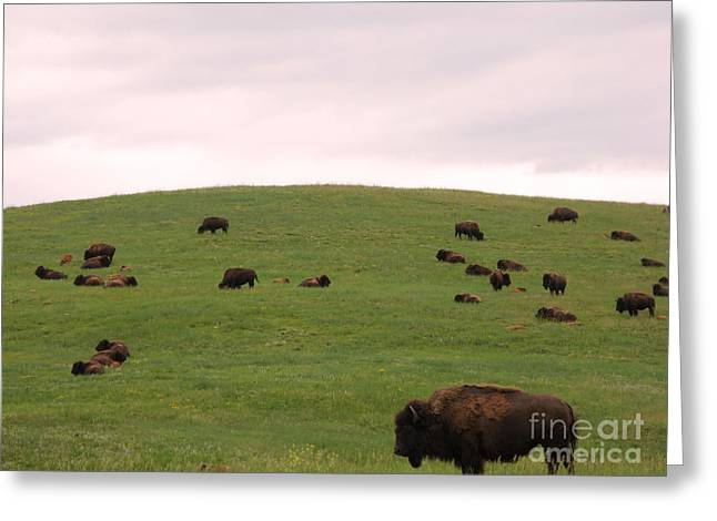 Bison Herd Greeting Card by Olivier Le Queinec