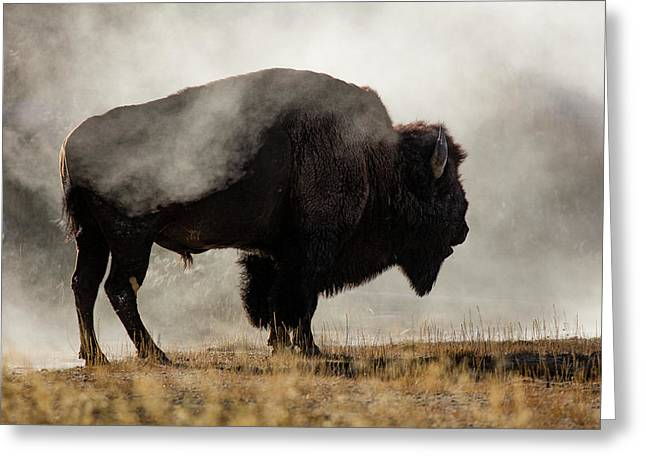 Bison In Mist, Upper Geyser Basin Greeting Card