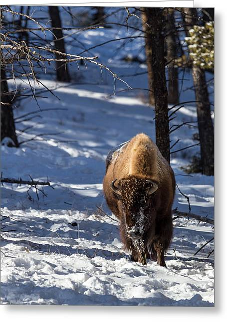 Bison In Winter Greeting Card