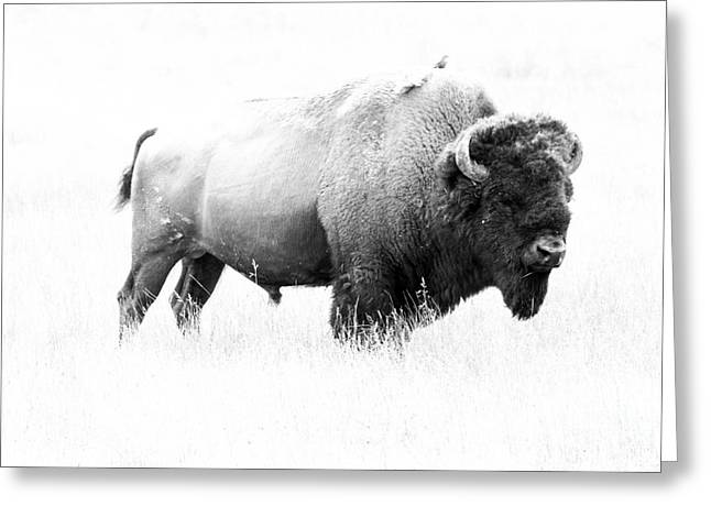 Bison - Monochrome Greeting Card