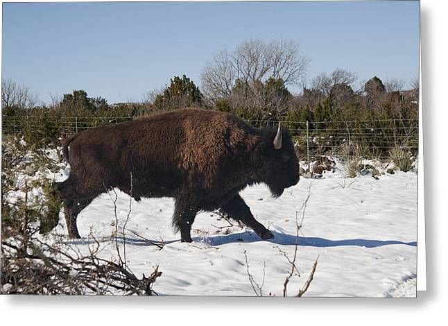 Bison Running In Snow Greeting Card by Melany Sarafis