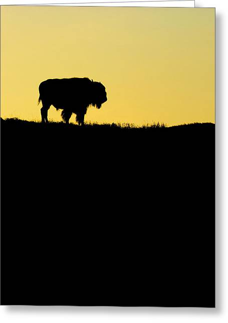 Greeting Card featuring the photograph Bison Sunrise by Sonya Lang