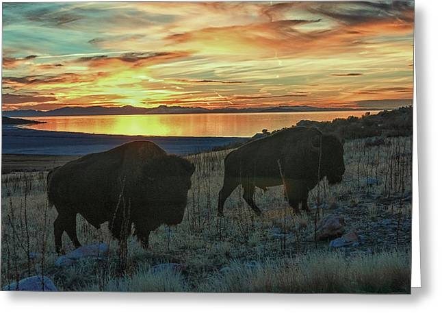 Bison Sunset Greeting Card
