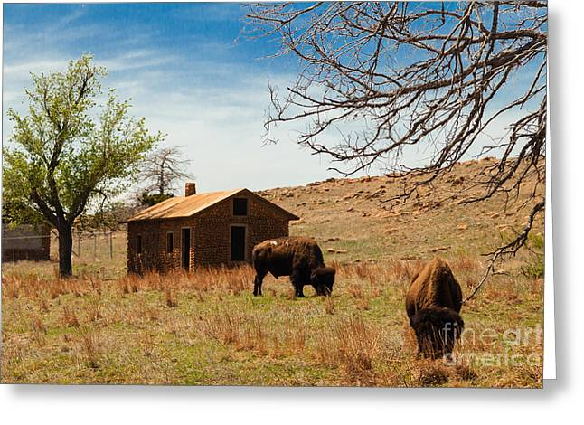Bisons In The Springtime Greeting Card by Iris Greenwell