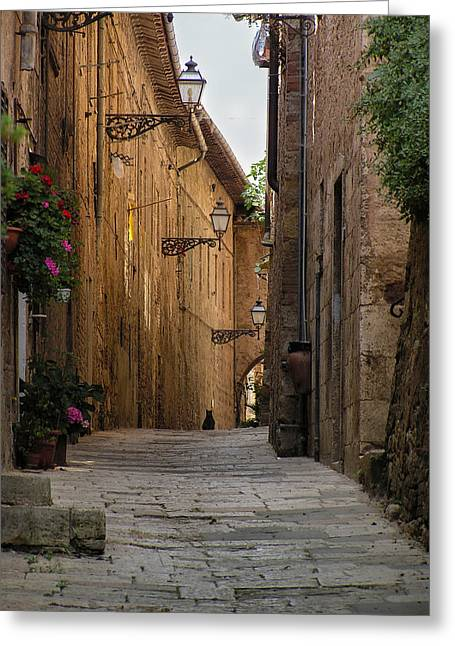 Black Alley Cat Greeting Card