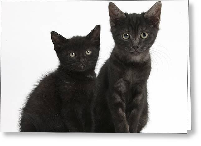 Black And Black Smoke Kittens Greeting Card