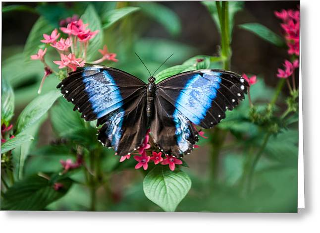 Black And Blue Wings Greeting Card
