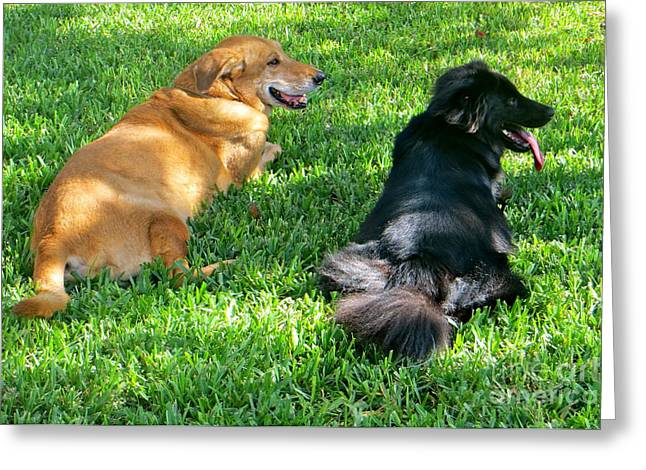 Greeting Card featuring the photograph Black And Tan by Joy Hardee